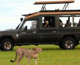 سفاري إلى محمية ماساي مارا في كينيا لمدة 3 أيام وليلتين