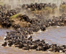 10 أيام في كينيا وتنزانيا