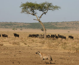 Mzungu Safari 5 Days and 4 Nights