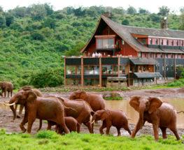 استمتع برحلات سفاري لمدة 8 أيام في كينيا