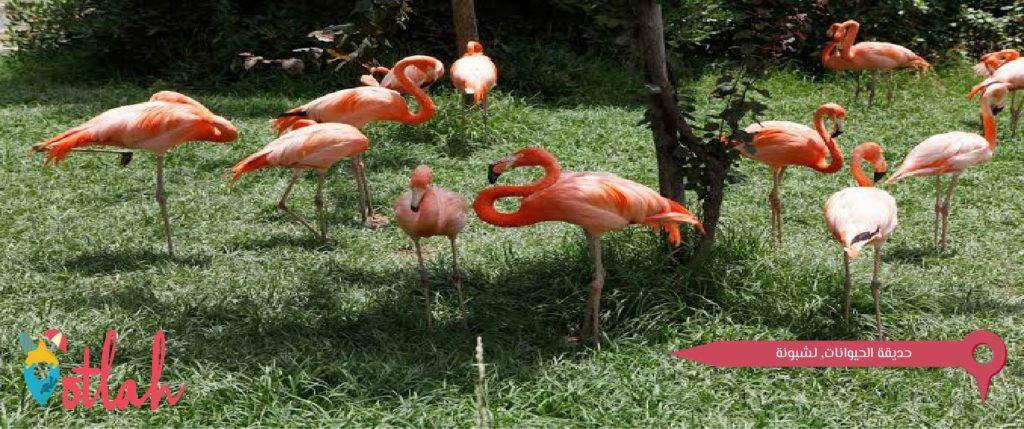 عاصمة البرتغال - حديقة الحيوانات