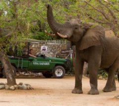 4 Day Lodge/Treehouse Safari