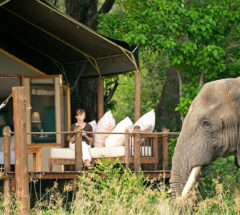 3-Day Tent Safari, South Africa