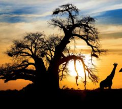 Live Amazing 5 Days of Lodge/Tent Safari