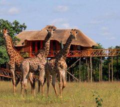 3 Day Treehouse Safari