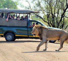 6 Day Safari Tremisana Lodge