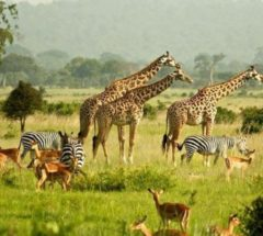 4 Day Katekani Tented Lodge Safari