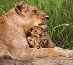 4-Day Lodge and Tent Safari, South Africa
