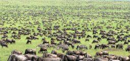 Enjoy 11days/ 10nights safari in Kenya and Tanzania