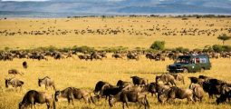 Wonders Of Kenya And Tanzania 8 Days/7 Nights Safari