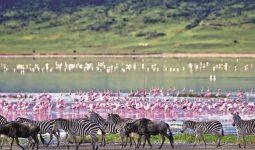 Amazing Tanzania safari 8 days/7nights
