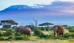 Amazing safari tour in Kenya & Tanzania for 10 days