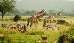 Journey of the Wildebeest 7 days/6nights safari