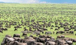 استمتع بسفاري لمدة 11 يوم / 10 ليال في كينيا و تنزانيا