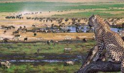 NORTH CIRCUIT ADVENTURE 6 days/5nights safari
