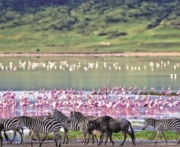 Amazing Tanzania safari 8 days/7nights