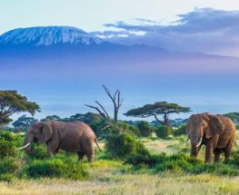 Amazing safari tour in Kenya & Tanzania for 10 days