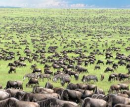 Enjoy 11days/ 10nights safari in Kenya and Tanzania