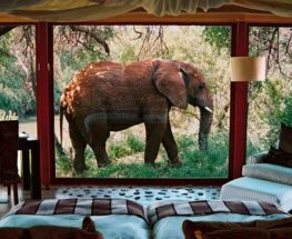 Unforgettable 6 Day Lodge/Tent Safari in South Africa