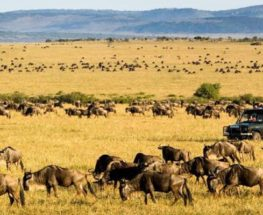 Wonders Of Kenya And Tanzania 8 Days/7 Nights Safari
