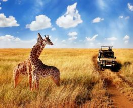 Majestic Tanzania 6 days/5 nights safari