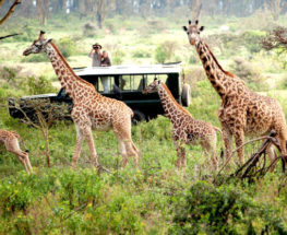 2 Days in Blitz Overland Safari