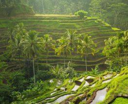 5 Days – 4 Nights Amazing Bali Tour