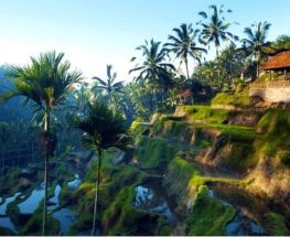 Explore the magical Ubud for 6 days