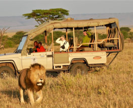 Enjoy the best of Kenya & Tanzania for 12 days