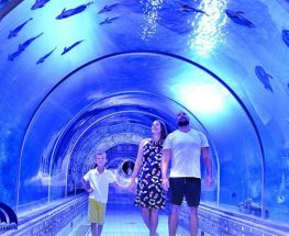 Discover the Red Sea with Hurghada Grand Aquarium