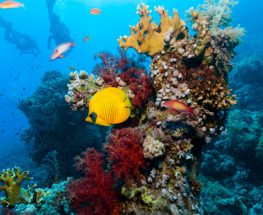 Marine adventure in Ras Mohamed