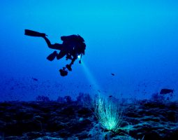 Scuba Diving Trip - Night Diving (12 Hours)
