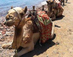 ركوب الخيل والجمال المثير على شاطئ اللاجونا