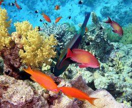 استمتع بجولات مذهلة في البحر الأحمر