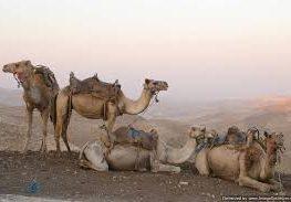 camel riding adventure