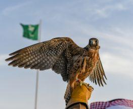 Amazing Falcon Show Experience