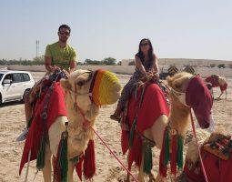 Experience a Camel Safari in Qatar