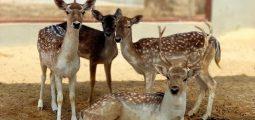 اقض يومًا مع عائلتك في حديقة حيوان مون زو