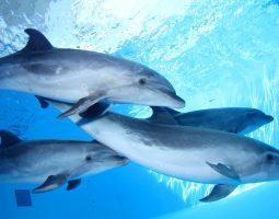 Enjoy our dolphin show