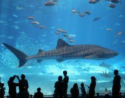 Aquarium tour