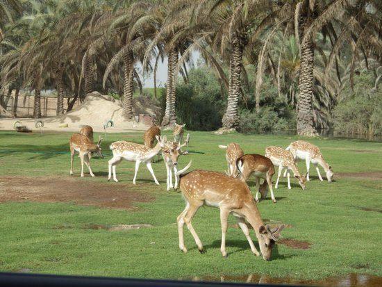 رحلة إلى أفريكانو بارك والأسكندرية