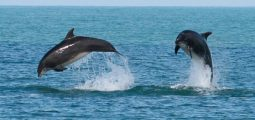 Watch beautiful dolphins on this pleasant boat trip