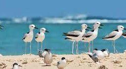 مشاهدة الطيور في مسقط