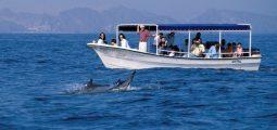 Go on a Dolphin watch