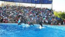 عرض الدولفين والسباحة مع الدلافين شرم الشيخ