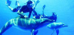 السباحة مع رحلة الدلافين والغطس فى مرسى علم