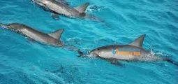 السباحة مع رحلة الدلافين والغطس في مرسى علم