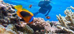 رحلة غطس في جزر حماطة من مرسى علم