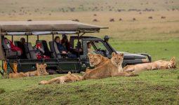 12 Day Best of Kenya & Tanzania