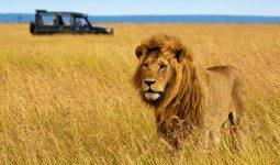 Enjoy the best of Masai Mara, Lake Nakuru and Mombasa